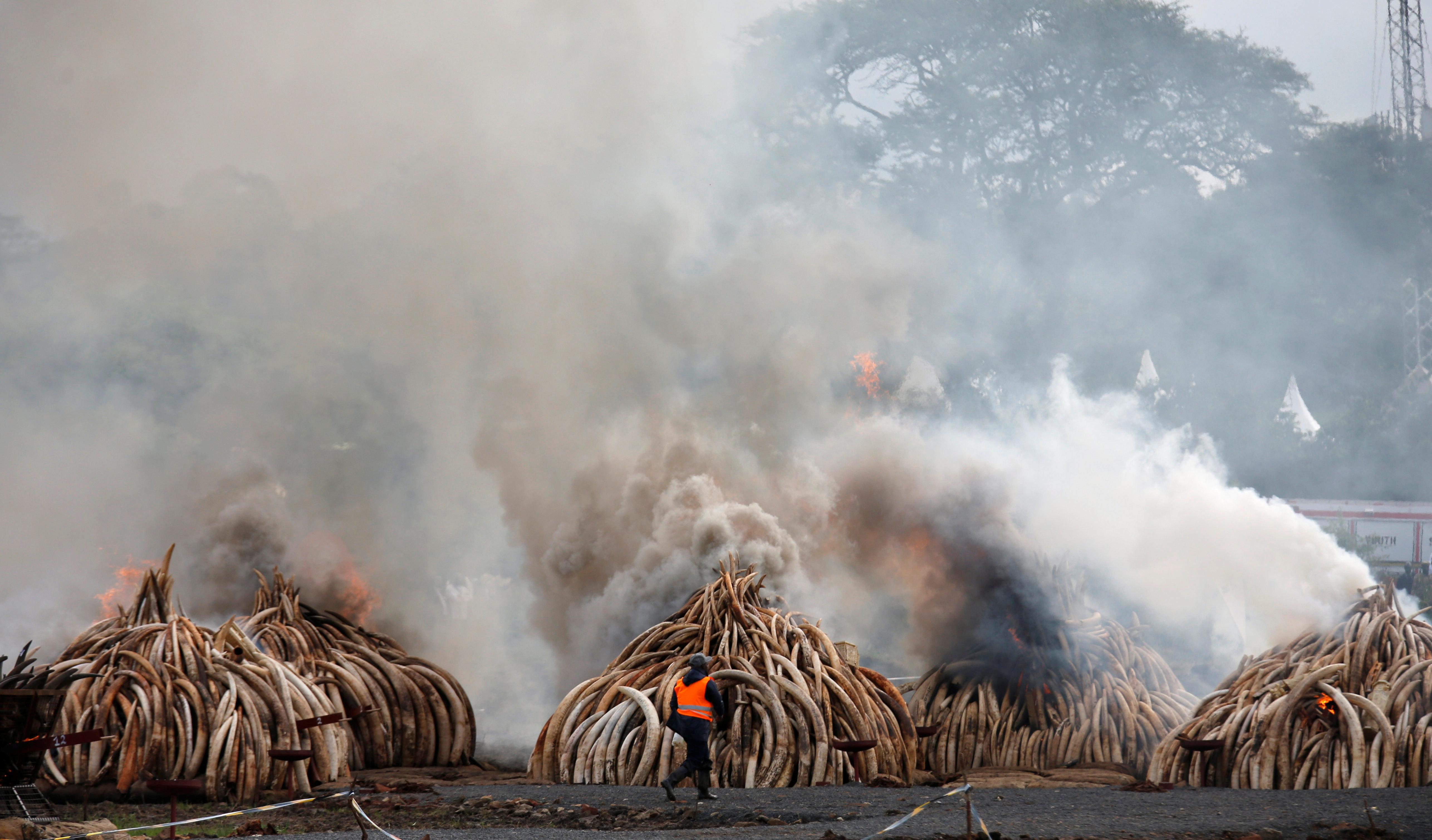 A fire expert monitors the burning of confiscated ivory from smugglers and poachers, at the Nairobi National Park near Nairobi, Kenya, April 30, 2016. REUTERS/Thomas Mukoya