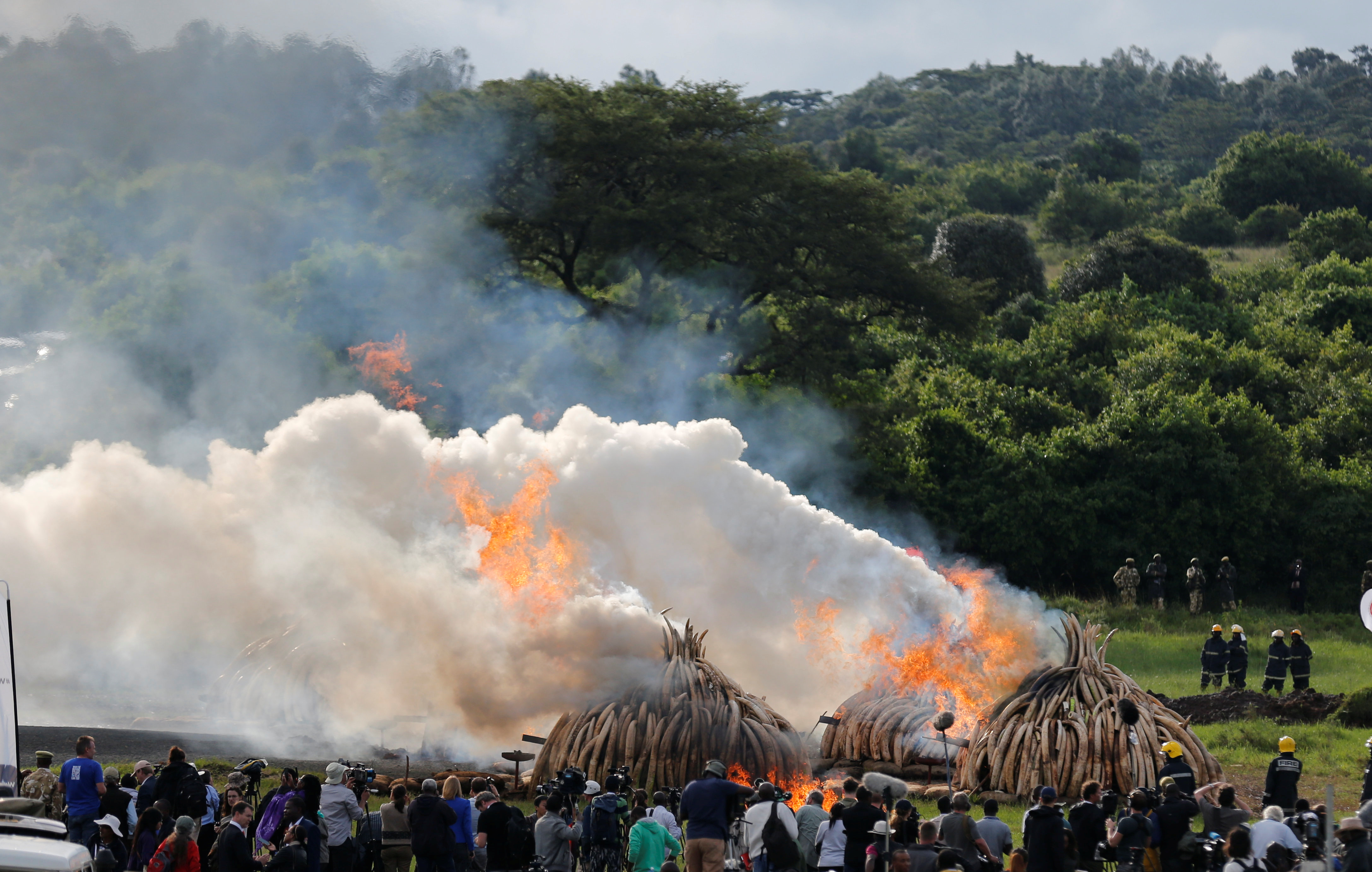 A general view shows part of the 105 tonnes of elephant tusks confiscated ivory from smugglers and poachers burning at the Nairobi National Park near Nairobi, Kenya, April 30, 2016. REUTERS/Thomas Mukoya - RTX2C94J
