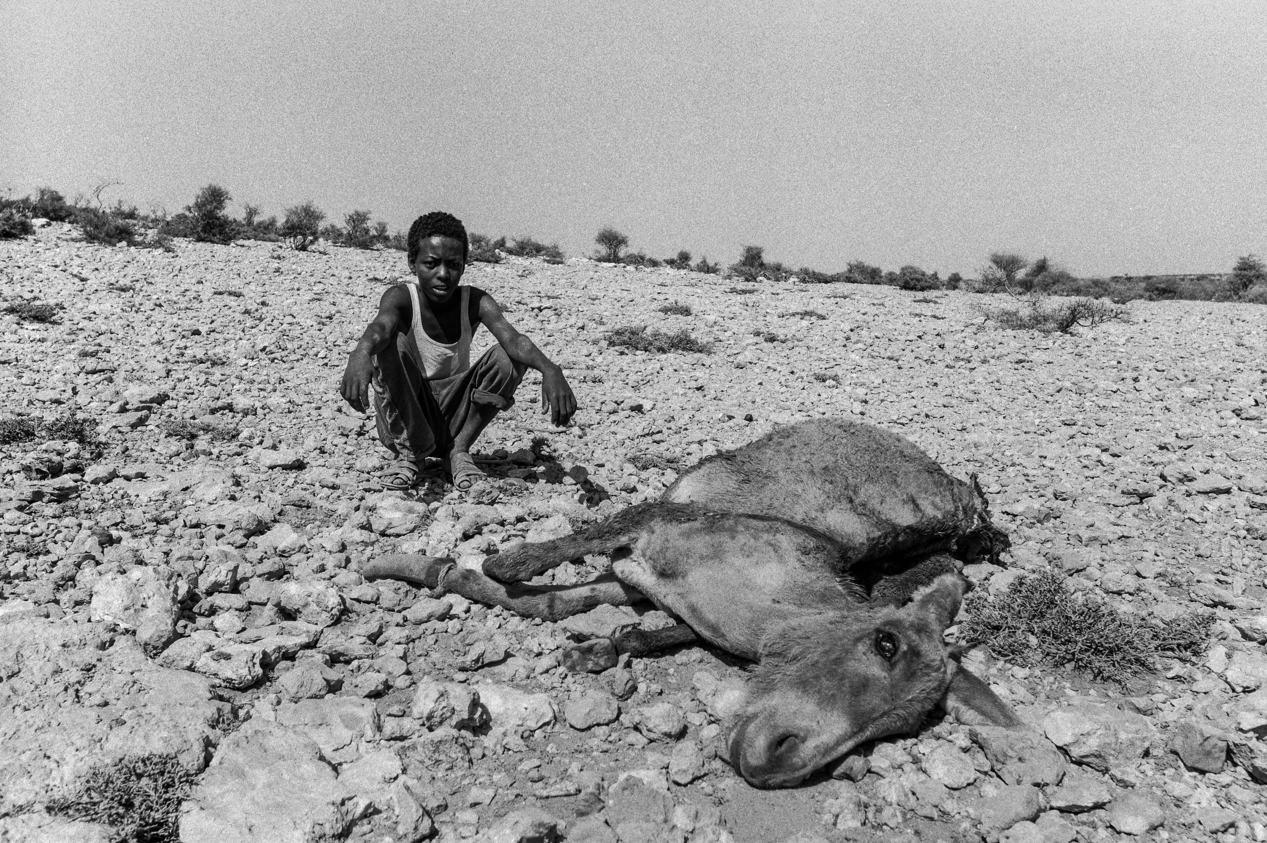 A boy sits near a dead donkey in Somalia. Photo by Sebastian Rich for UNICEF