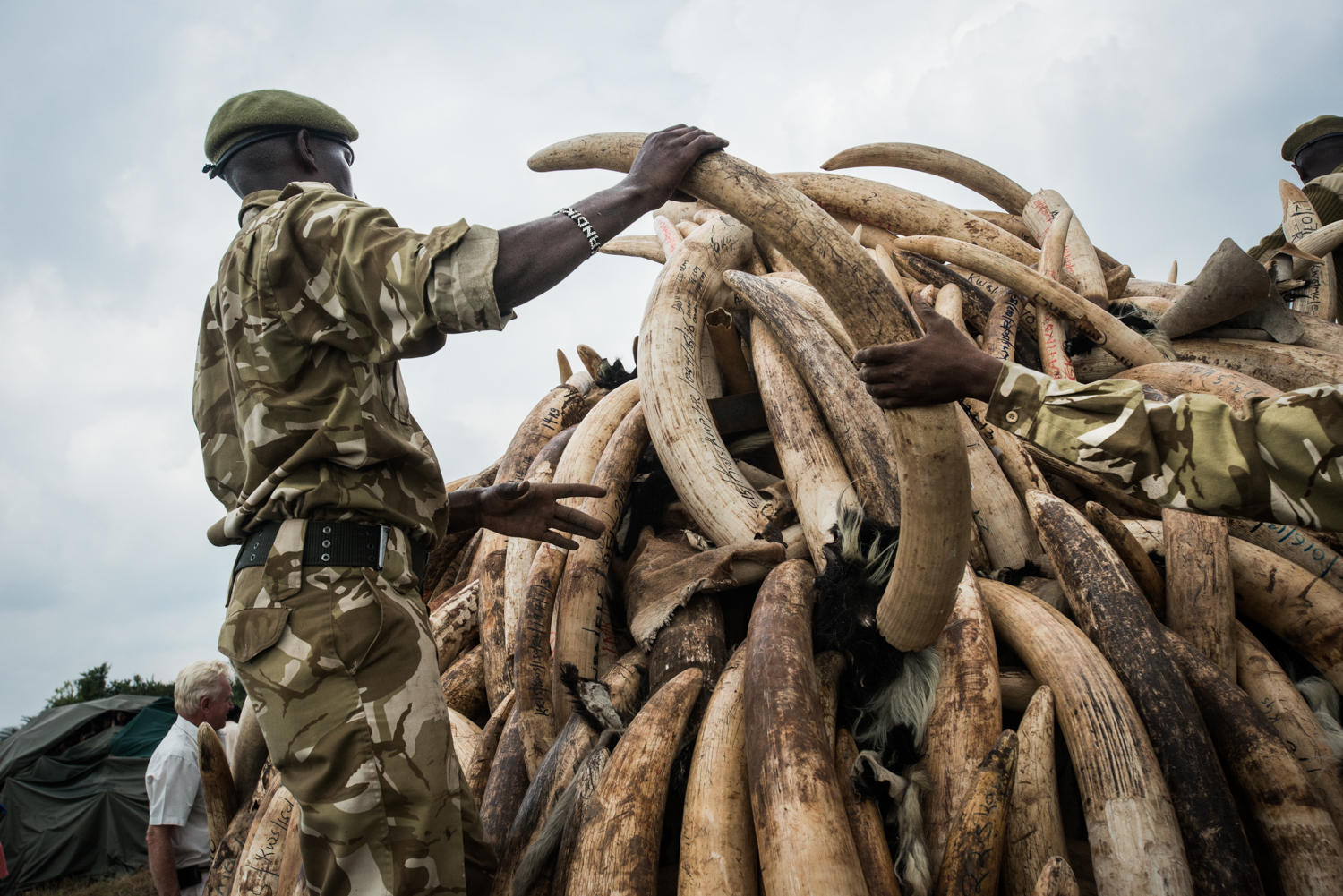 The ivory is stacked into large piles for the burn. Photo by Mia Collis for the Kenya Wildlife Service