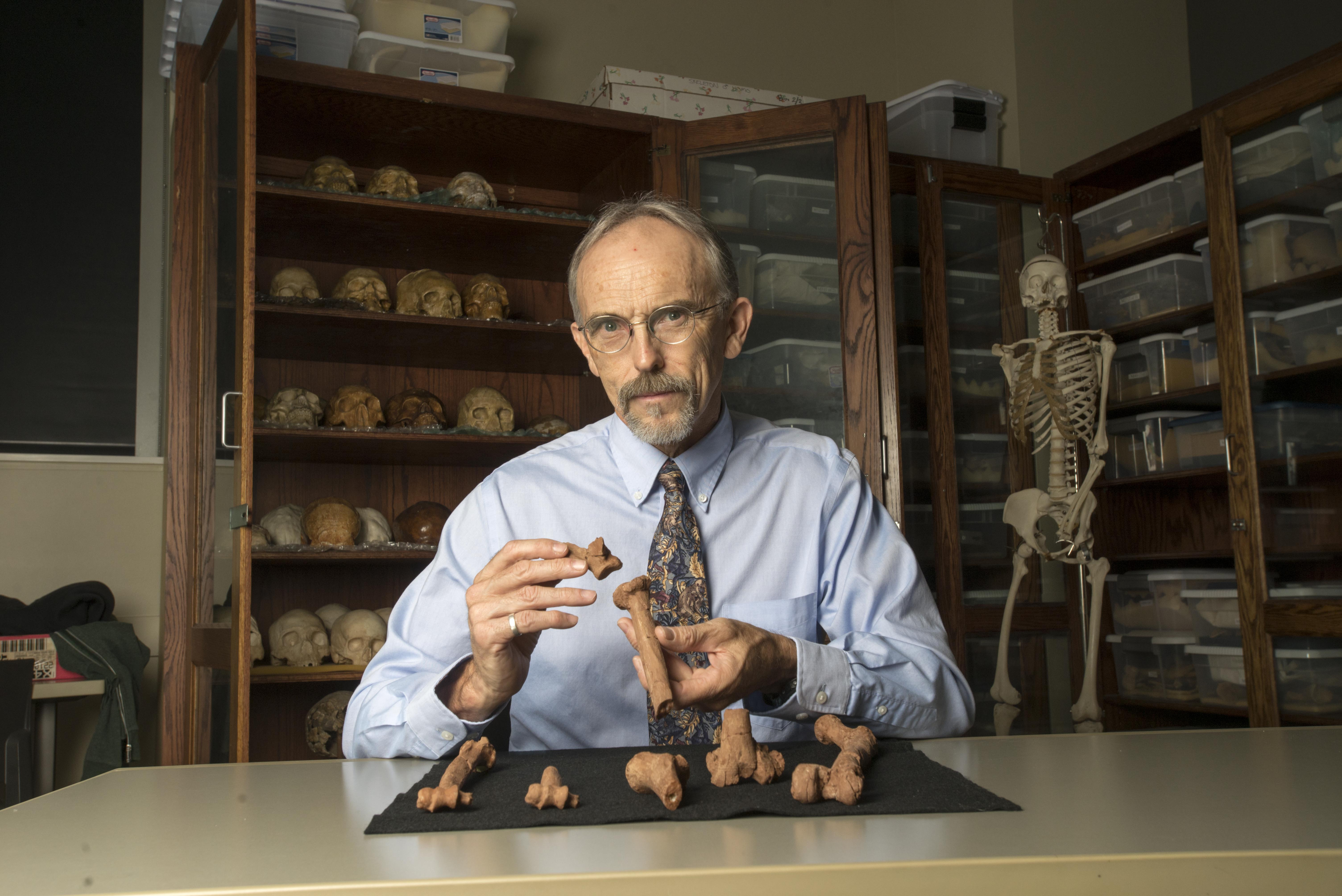 UT Austin professor John Kappelman with 3D printouts of Lucy's skeleton illustrating the compressive fractures in her right humerus that she suffered at the time of her death 3.18 million years ago. Photo by Marsha Miller, UT Austin.