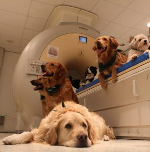 Researchers in Hungary tested several canines to see how their brains processed both word meaning and speech intonation. PHOTO BY: Atilla Andics