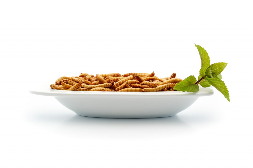 Mealworms aren't only a good source of iron and other minerals, based on new research, biological anthropologist Darna Dufour said these worms and other larvae can serve as source of fat for malnourished communities. Photo by Phodo Design/via Adobe