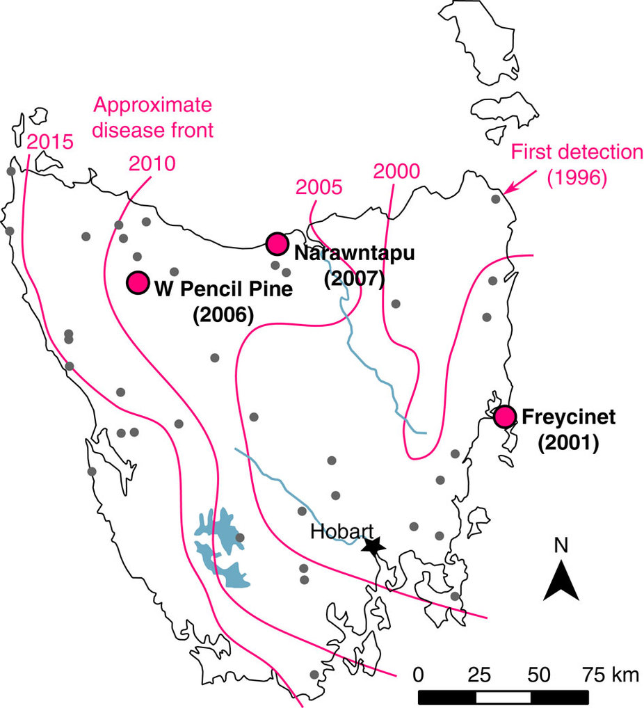 Devil facial tumor disease first appeared in Tasmania's northeast corner in 1996. The magenta lines indicate the approximate location of the disease front in 2000, 2005, 2010 and 2015. The dots show populations analyzed by Andrew Storfer and his colleagues. Illustration by Epstein B et al., Nature Communications, 2016