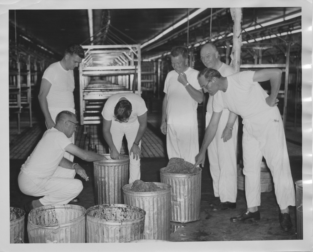Photograph of Edward F. Knipling with colleagues inspecting ground meat. In the 1950s, ground meat, beef blood and water were used to raise screwworms in the lab. Photo by USDA Agricultural Research Service