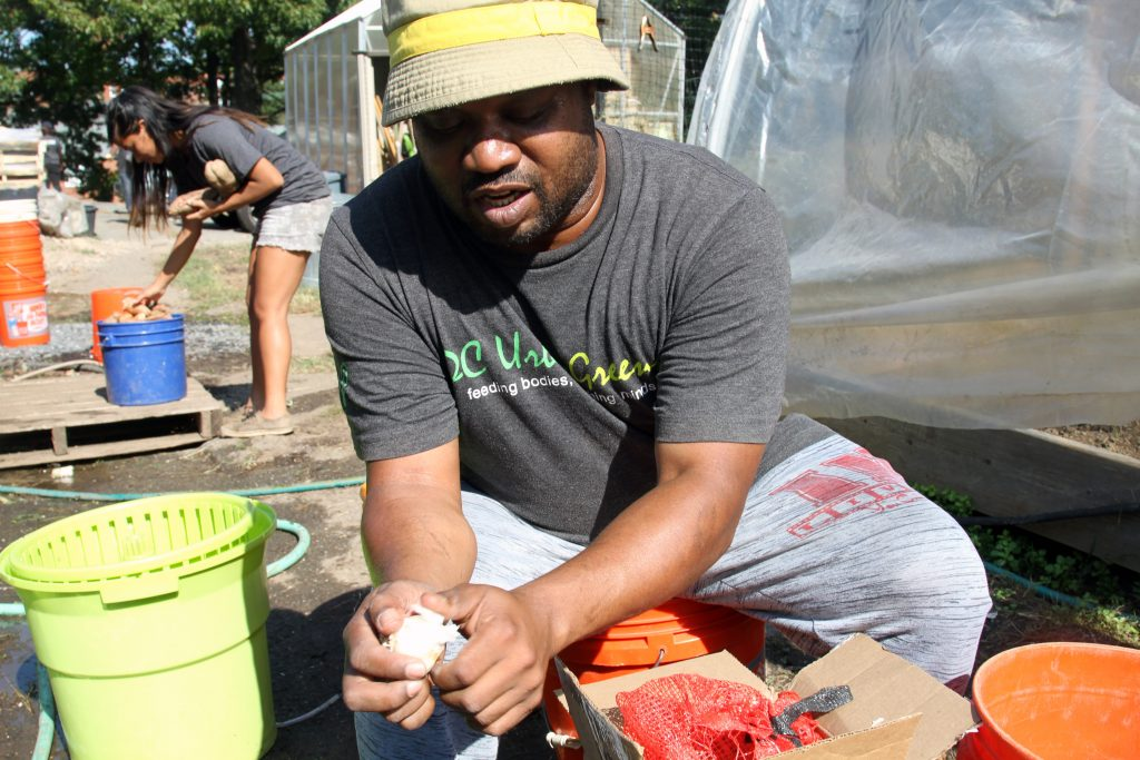 D.C. urban gardens bring low-cost, fresh produce to city's food deserts