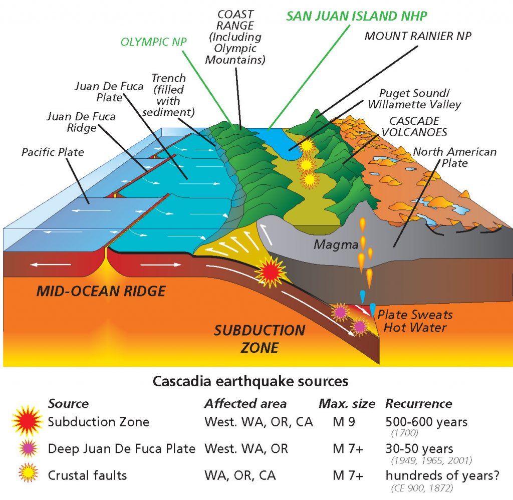 As the oceanic crust of the Juan de Fuca plate slips underneath the North American plate, it can create areas above the subduction zone (purple stars) where rocks melt and mix with ocean water. This magma is more buoyant than usual, and thus rises through the crust, creating volcanoes. This volatile merger point between these tectonic plates is known as a continental arc. Photo by NPS/R. J. Lillie. 2005. Parks and Plates.