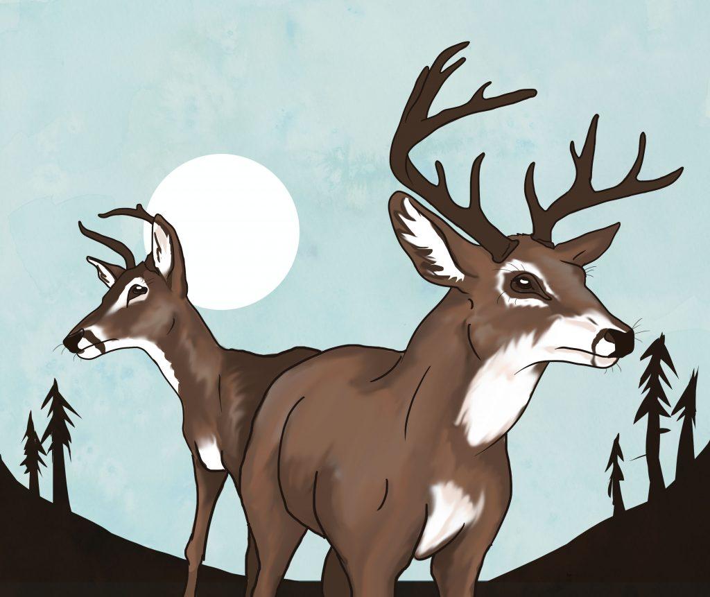 Tit deer rack