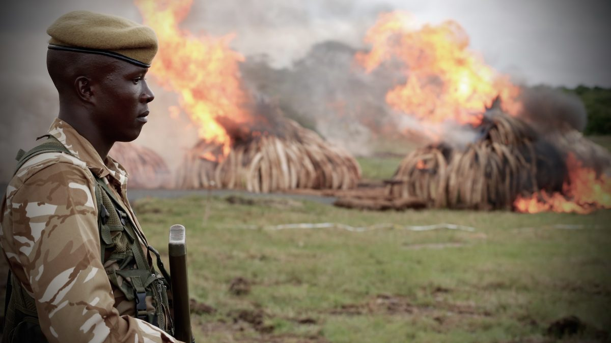 "An African soldier oversees the destruction of illegally poached elephant tusks in ""The Ivory Game."" Photo courtesy of Netflix's ""The Ivory Game"""