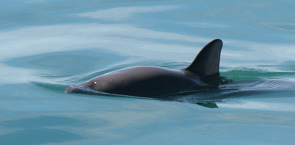"""Photo by Paula Olson/NOAA via Wikimedia Commons"""""""