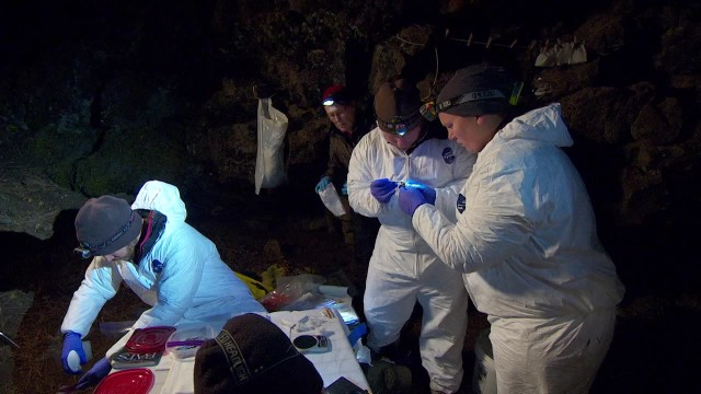 Researchers in eastern Oregon capture bats in nets to look for signs of white-nose syndrome and document the health and size of the region's bat populations. Photo by Todd Sonflieth/OPB