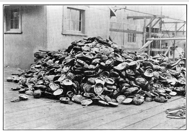 White abalone was so popular that it was nearly eaten to extinction. These shells sit outside a Monterey market in 1930. Photo by Richard S. Crocker/Online Archive of California/KQED