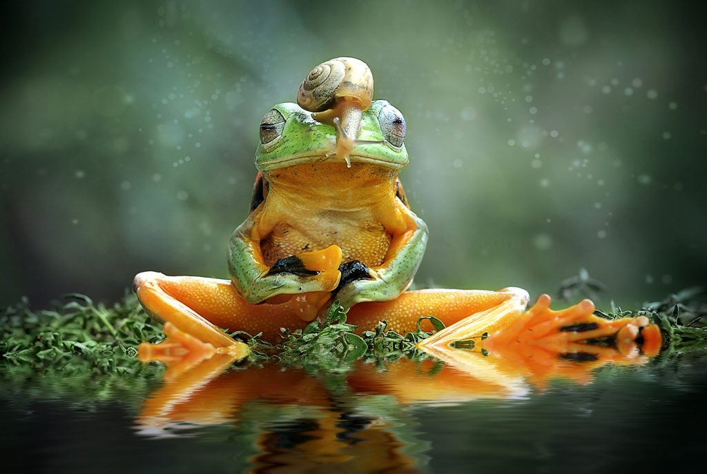 A green frog sits like a human with a snail on its head.