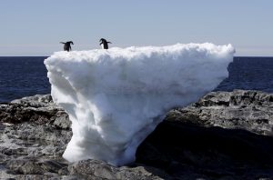 Two adelie penguins stand atop a block of melting ice on a rocky shoreline at Cape Denison, Commonwealth Bay, in East Antarctica in this 2010 file photo. Photo by Pauline Askin/Reuters
