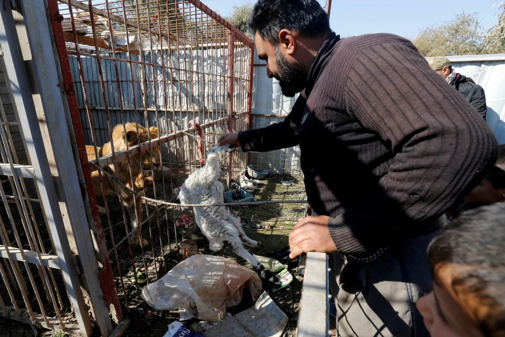 Local residents, who alerted the animal charity Four Paws about the animals' situation via Facebook, were helping keep them alive by giving them whatever food they could spare. Photo by Muhammad Hamed/Reuters