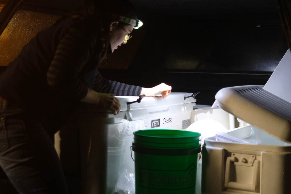 Kristen Aquilino searches for a spatula so she can remove a wild-caught white abalone from inside a cooler that transported the animal from Los Angeles to San Francisco. Photo by Maggie Carson Jurow