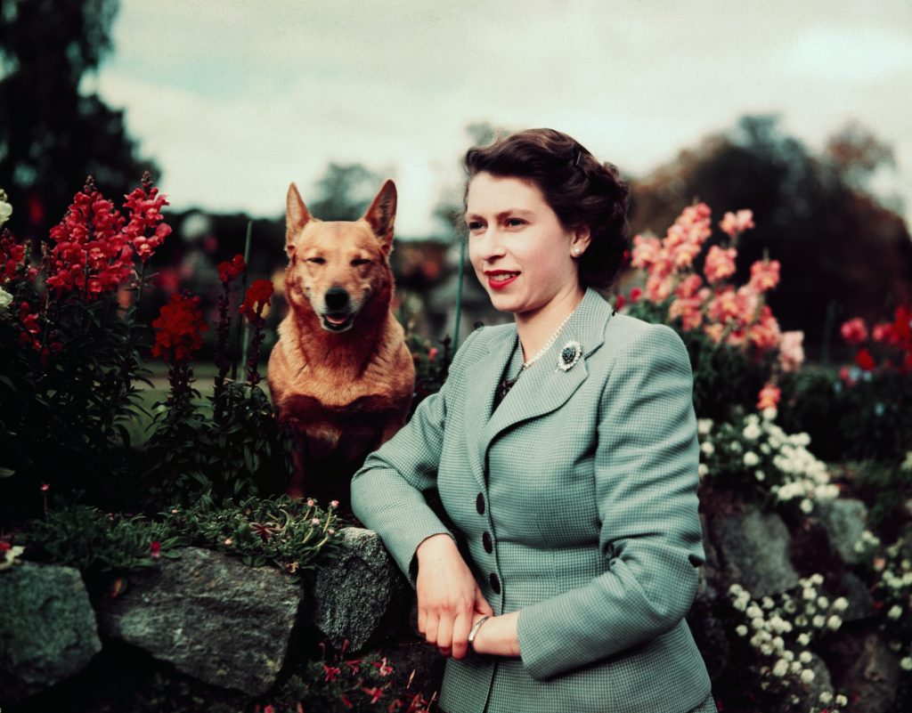 Queen Elizabeth II, seen here in March 1953, has a particularly love of Corgis. UPI color slide via Getty Images