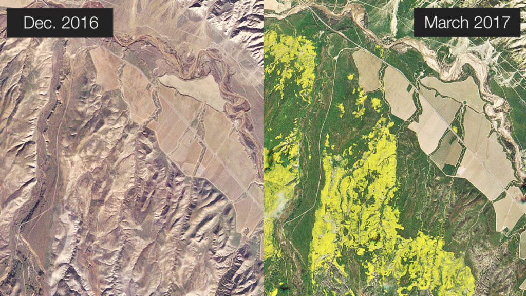 Left: Wildflowers north of Los Padres National Forest in early December 2016 (before the winter rains) and in late March during the wildflower super bloom. Images provided by Planet Labs