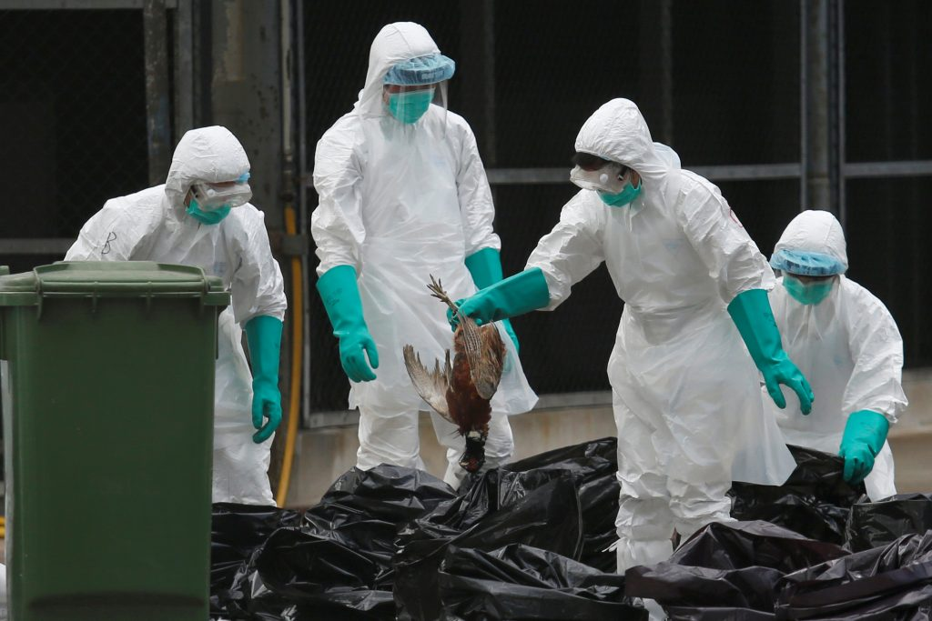 Health officers cull poultry at a wholesale market, as trade in live poultry suspended after a spot check at a local street market revealed the presence of H7N9 bird flu virus, in Hong Kong in June. Photo by Bobby Yip/Reuters