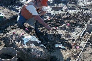 San Diego Natural History Museum Paleontologist Don Swanson pointing at rock fragment near a large horizontal mastodon tusk fragment.