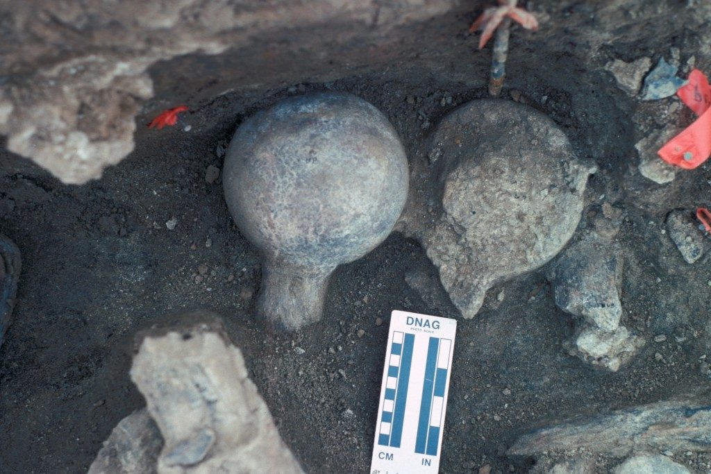 A view of two mastodon femur balls, one faced up and once faced down.