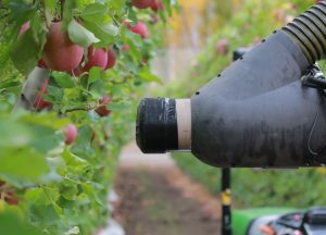 The prototype Abundant harvester zeroes in on a ripe apple. Photo by Dan Steere/Abundant Robotics
