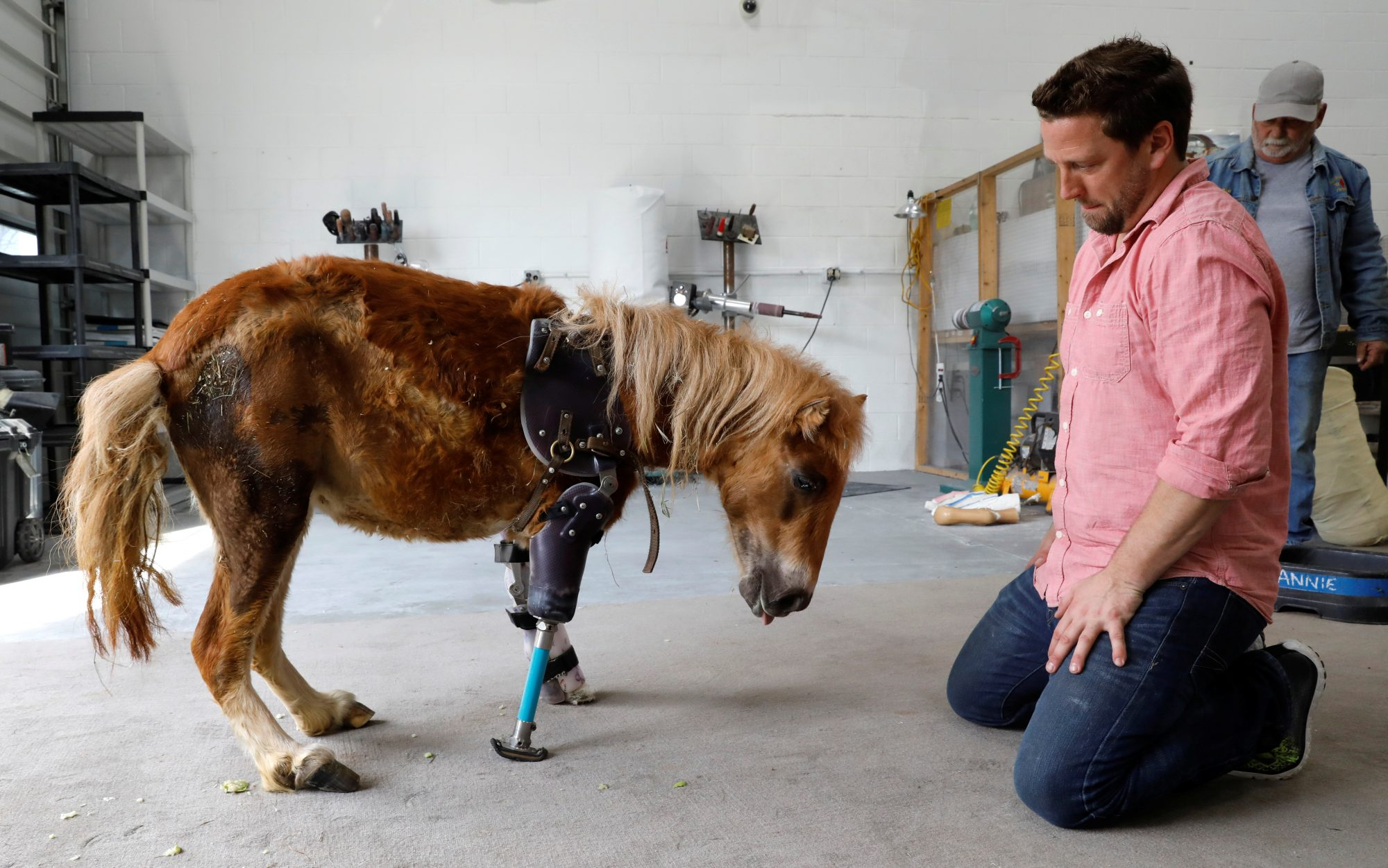 Derrick Campana Kneels Beside Angel Marie, A Three Legged Mini Horse Who  Wears A
