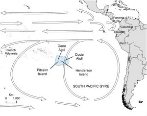 The location of Henderson Island, which is part of the the Pitcairn Islands Exclusive Economic Area (boundary for latter shown in light blue). Arrows indicate the direction of major oceanic currents and the South Pacific Gyre. Photo by Lavers J.L. and Bond A.L., PNAS, 2017.