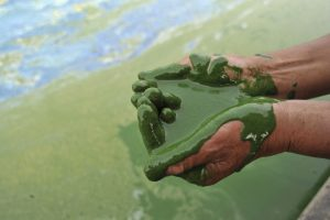 A fisherman fills his cupped palms with water from the algae-filled Chaohu Lake in Hefei, Anhui province, June 16, 2009. The country has invested 51 billion yuan towards the construction of 2,712 projects for the treatment of eight rivers and lakes including Huaihe River, Haihe River, Liaohe River, Chaohu Lake, Dianchi Lake, Songhua River, the Three Gorges region of the Yangtze River and its upstream area, Xinhua News Agency reported. Photo by REUTERS/Stringer