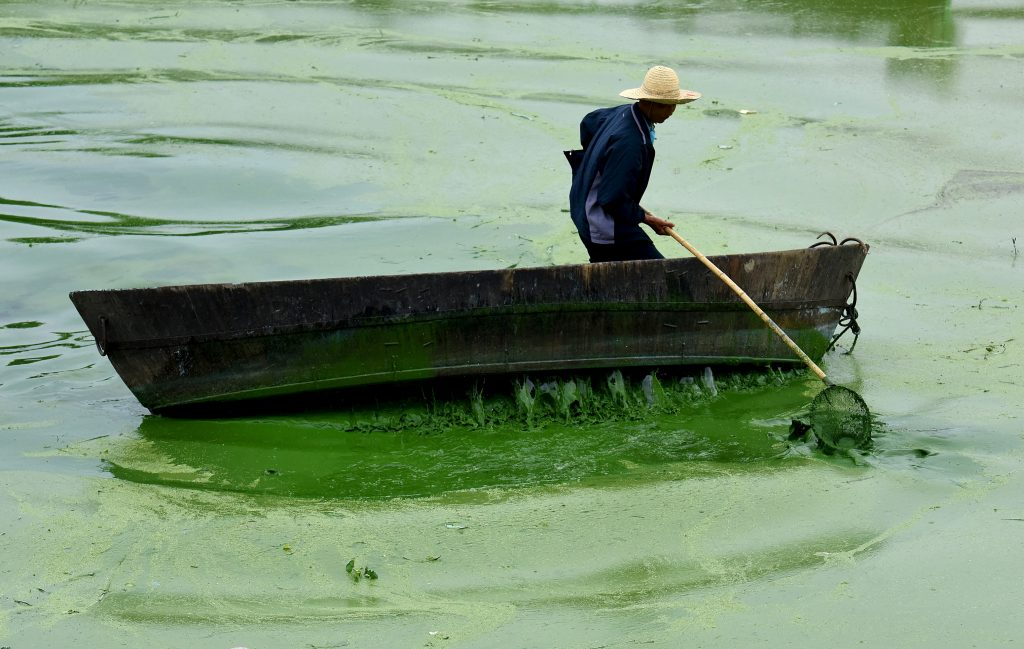A worker tries to clear blue-green algae from Chaohu Lake, Hefei, Anhui province, China, July 4, 2015. Photo by REUTERS/Stringer CHINA OUT.