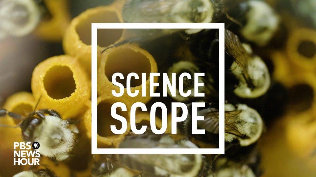 ScienceScope SS106 - Bumblebeer
