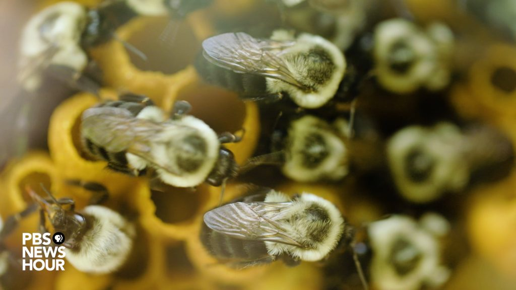 Only two species of yeast --- ale yeast and lager yeast -- have been used for traditional beer brewing over the last 600 years. A lab in North Carolina may have found a third in the strangest place: On bees and wasps. Photo by Matt Ehrichs