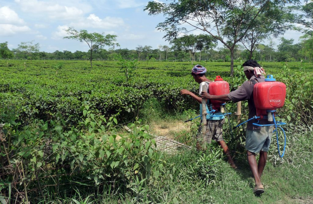 Farmers in Assam, India, sought better living and working conditions on tea plantations. Photo courtesy of the Accountability Counsel