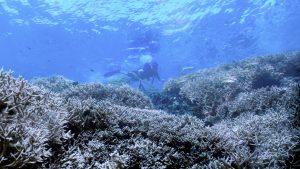 Chasing Coral Still_9