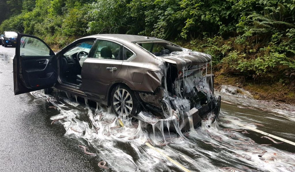 "A car covered in ""slime"" from hagfish, which spilled out of a truck onto a highway in Oregon last week. Photo courtesy of Oregon State Police."