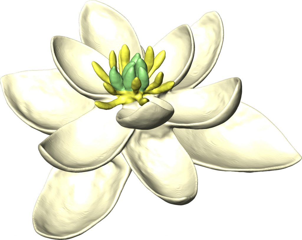 Why the first flowers may have looked like magnolias pbs newshour the ancestor of magnolia and oak trees grass tomatoes daffodils and izmirmasajfo