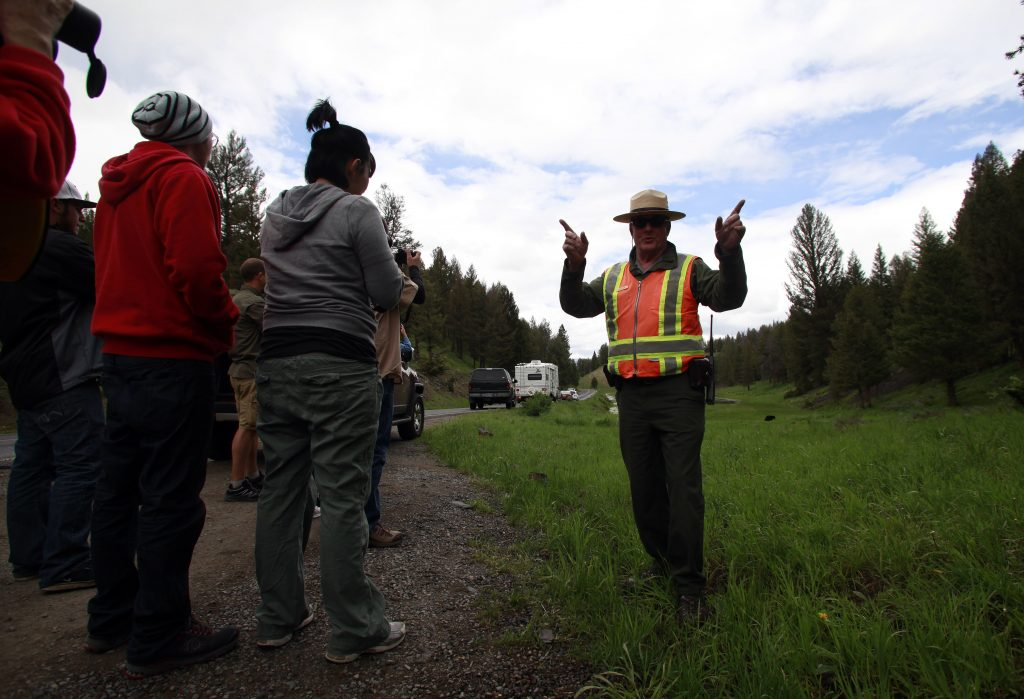 Ranger John Kerr keeps travelers a safe distance of at least 100 meters away from an approaching black bear in Yellowstone National Park, Wyoming, June 20, 2011. REUTERS/Jim Urquhart (UNITED STATES) - RTR2O7PR