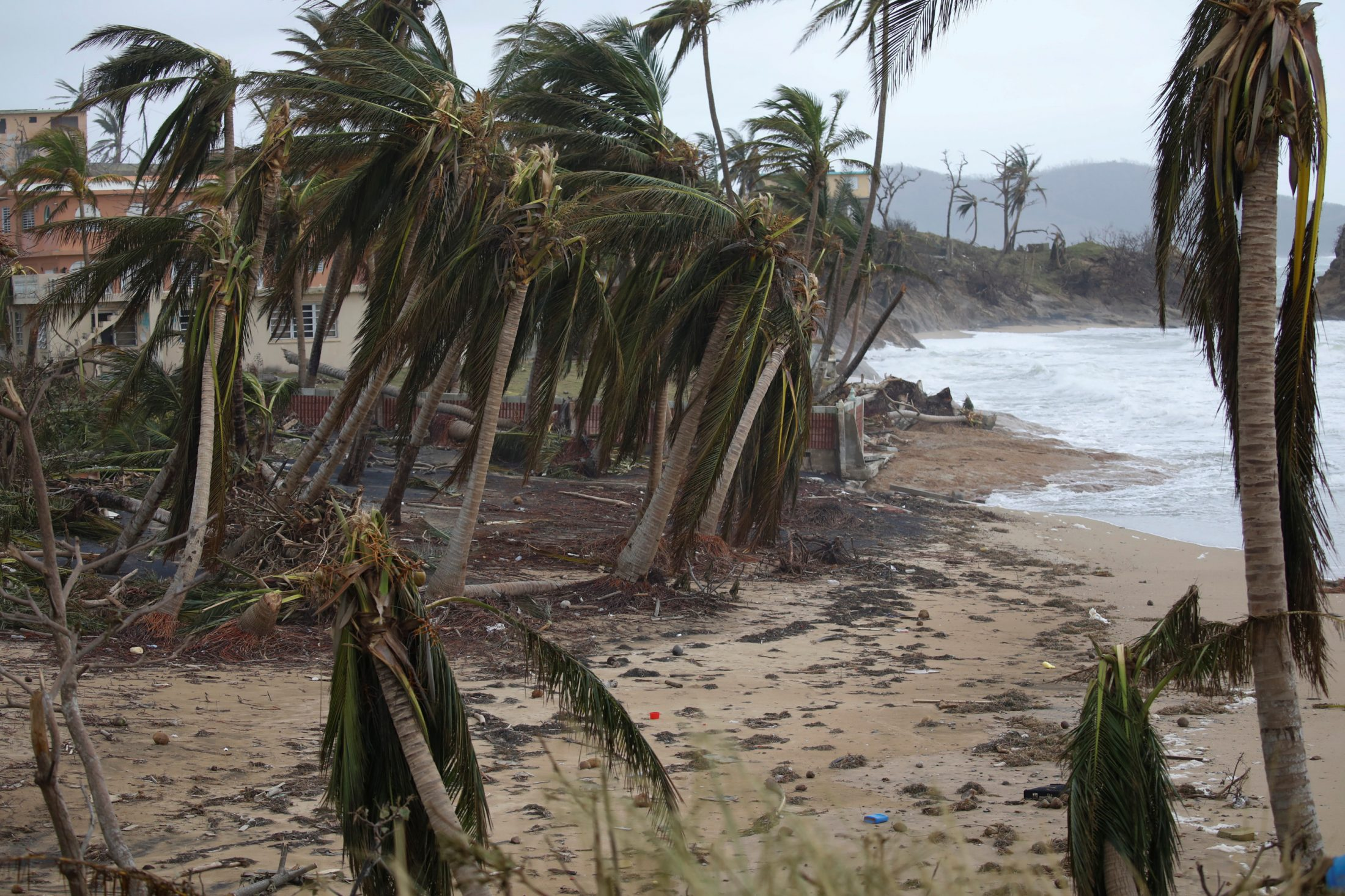 Broken palm trees are seen after the area was hit by Hurricane Maria in Yabucoa, Puerto Rico. Photo by Carlos Garcia Rawlins/Reuters