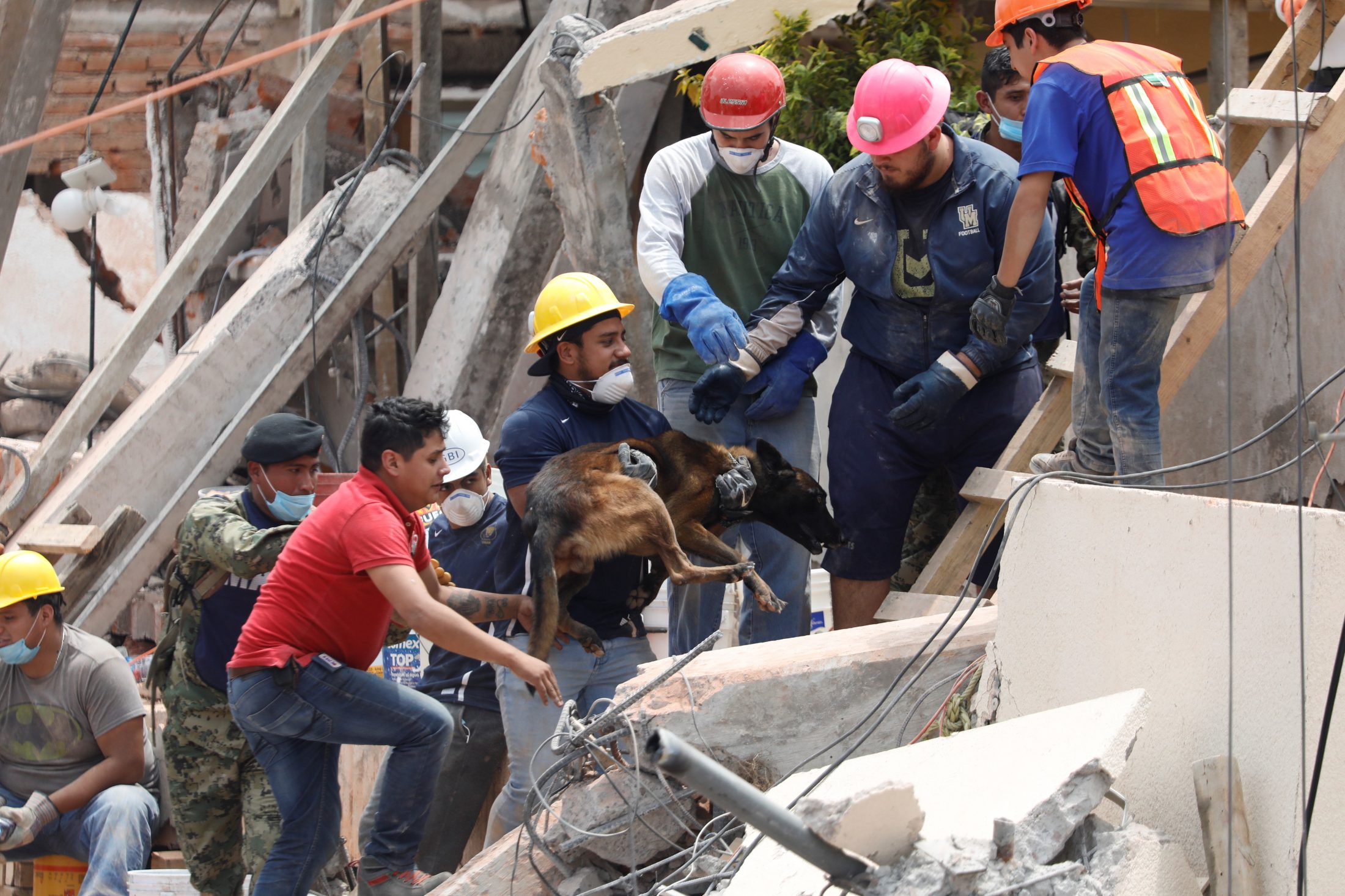 A rescue dog helps in the search for students at the collapsed school. Photo by Edgard Garrido/Reuters
