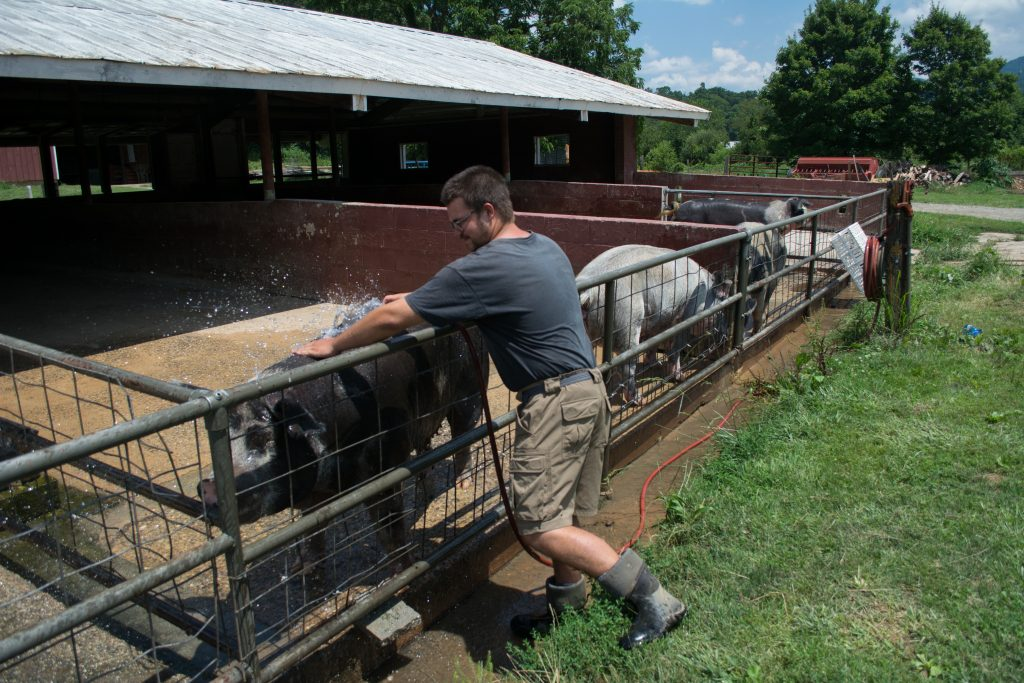 Senior Landon George checks on pigs as they cool off on in the mud at on the 275-acre farm at Warren Wilson College. Photo: Jesse Pratt Lopez for The Hechinger Report