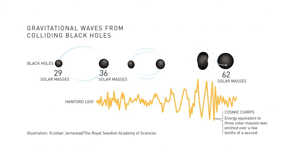 The two black holes emitted gravitational waves for many million years as they rotated around each other. They got closer and closer, before merging to become one black hole in a few tenths of a second. The waves then reached a crescendo which, to us on Earth, 1.3 billion lightyears away, sounded like cosmic chirps that came to an abrupt stop. Caption and illustration by Johan Jarnestad/The Royal Swedish Academy of Sciences