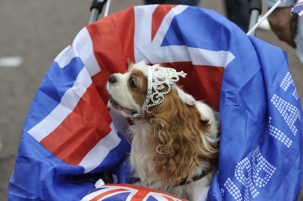 In the crowd, a tiara-sporting dog. Photo by Paul Hackett/Reuters