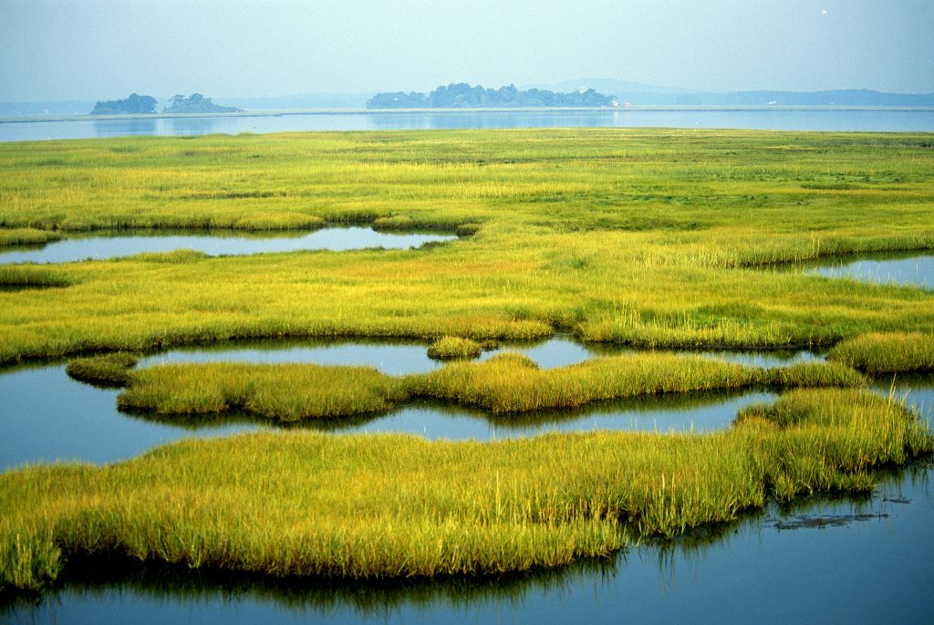 Coastal wetlands at Parker River National Wildlife Refuge in Newburyport, Massachusetts. Photo by Kelly Fike/U.S. Fish and Wildlife Service