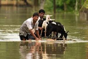 People use a makeshift raft to transport goats along a flooded road in the Jakhalabandha area of Nagaon district in the northeastern state of Assam, India. Photo by Anuwar Hazarika/Reuters