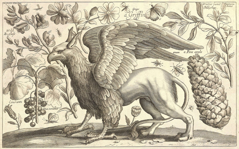 A griffin. Painting by Wenceslas Hollar/via Wikimedia