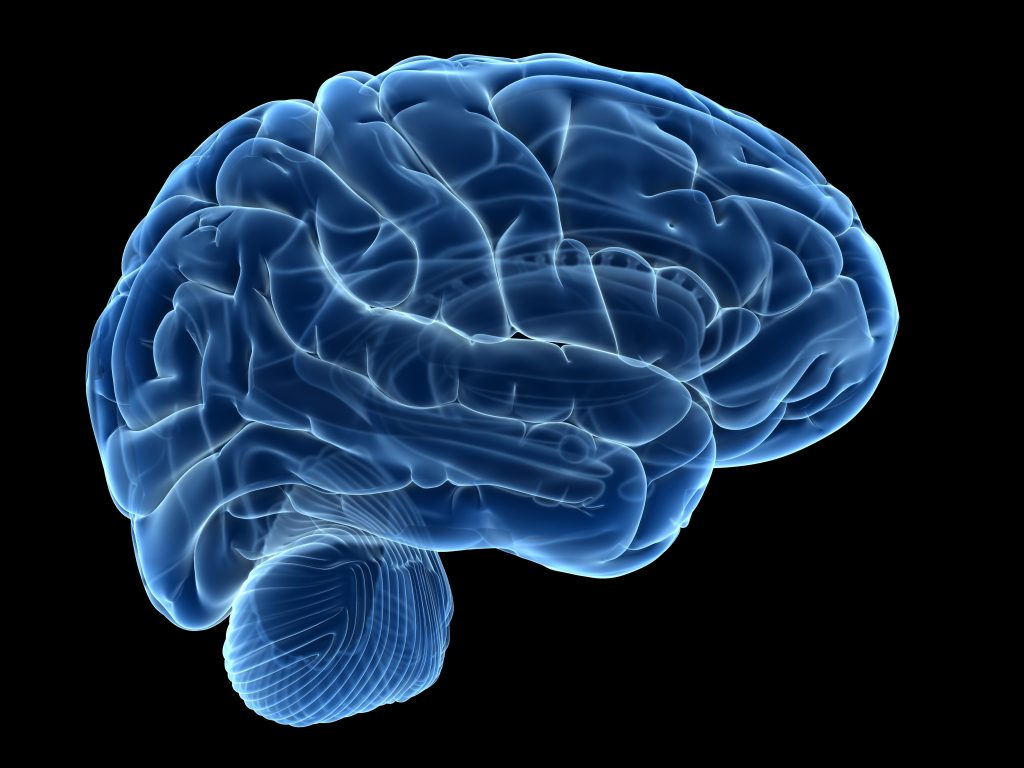 Human brain, computer illustration. Photo by Sebastian Kaulitzki/via Getty Images