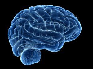 Human brain, computer illustration. Photo by Sebastian Kaulitzki/via Getty Images