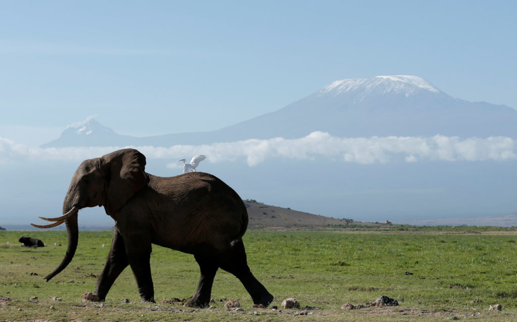 How lessons from fighting terrorism are saving elephants in Kenya