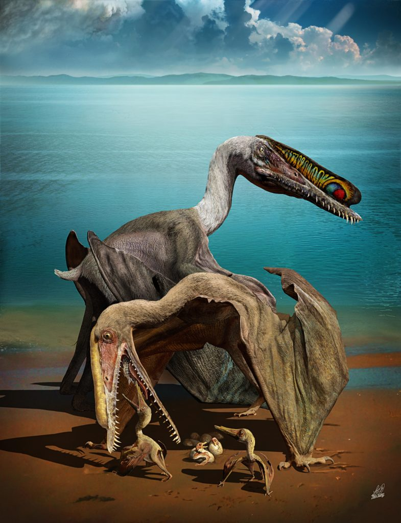 An artist's rendition of pterosaur parents with hatchlings. Illustrated by Zhao Chuang