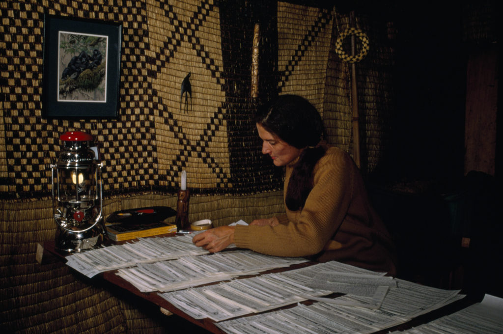 Dian Fossey reviewing field notes on gorillas at night. Photo by Robert I.M. Campbell